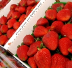 Santa Maria Strawberries