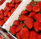 Santa Maria Strawberries