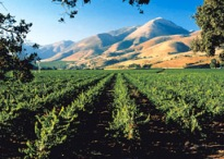Santa Maria Wine Country